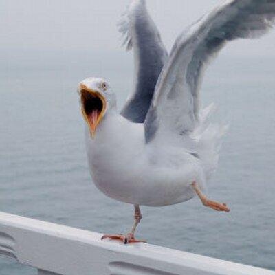 secpic_seagull1_b1233704043_400x400